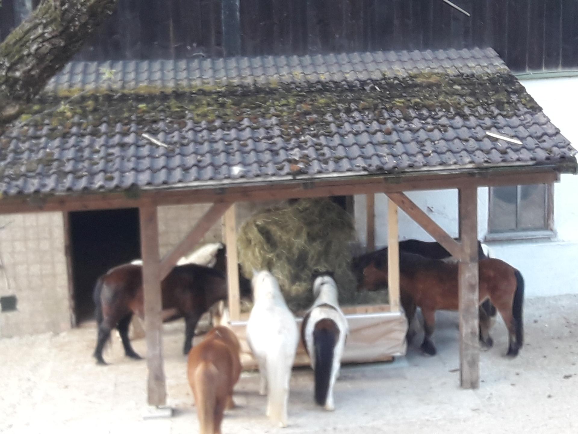 Raufomat Basis mit Ponys
